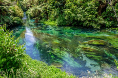 Blue Spring which is located at Te Waihou Walkway,Hamilton New Zealand. It internationally acclaimed supplies around 70% of New Zealand`s bottled water because royalty free stock photos