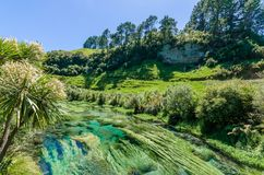 Blue Spring which is located at Te Waihou Walkway,Hamilton New Zealand. It internationally acclaimed supplies around 70% of New Zealand`s bottled water because stock photos