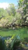 Blue Springs Стоковая Фотография RF
