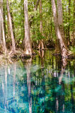 Blue Springs Royalty Free Stock Images