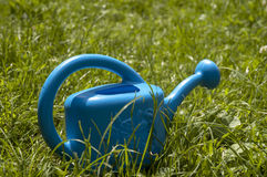 Blue Sprinkle. Standing on the grass Stock Photo