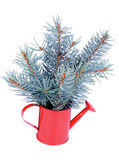 Blue Spruce Branch Stock Images