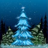 Blue spruce Royalty Free Stock Image