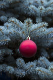 Blue Spruce with hanging Red and golden ball Stock Photography