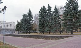 Blue spruce next to the bare birch trees in the city square in the autumn. Blue spruce next to the bare birch trees in the city square in autumn, cloudy evening royalty free stock images