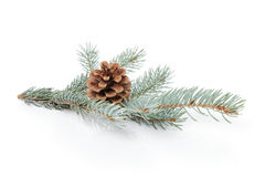 Blue spruce twig with cone Royalty Free Stock Photos
