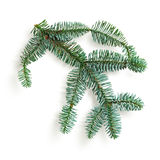 Blue spruce twig Stock Photography