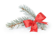 Blue spruce twig with ribbon bow Royalty Free Stock Image