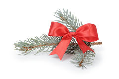 Blue spruce twig with ribbon bow Royalty Free Stock Photos