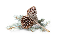 Blue spruce twig with three cones Royalty Free Stock Photos