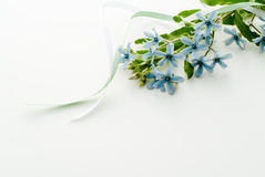 Blue star flowers Stock Image
