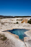 Blue star spring. In Upper Geyser Basin, Yellowstone National Park Stock Photo