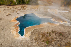 Blue Star Spring Yellowstone Stock Photography