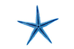 Blue starfish Stock Image