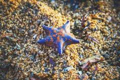 Blue starfish on coarse sand stock photography