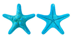 Blue starfish. Isolated on white background Stock Images