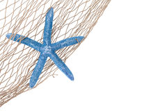 Blue starfish in a net Stock Photos