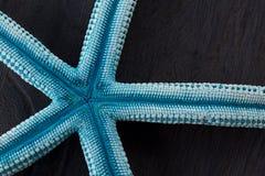Blue  starfish Royalty Free Stock Image
