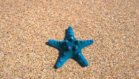 Blue starfish on the sand Royalty Free Stock Photo