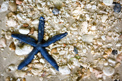 Blue starfish in the sea Royalty Free Stock Photo