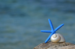 Blue starfish and snail Royalty Free Stock Photos