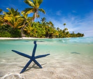 Blue starfish on tropical beach Royalty Free Stock Images
