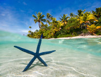 Blue starfish on tropical beach Stock Photos