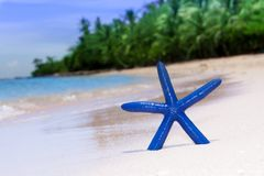 Blue starfish on white sand beach Royalty Free Stock Images