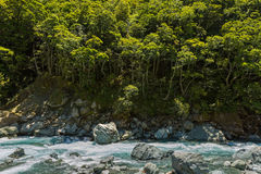 Blue stream and beech forest Royalty Free Stock Photography