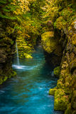 Blue stream and Fern covered Canyon Above Toketee Falls Douglas Royalty Free Stock Photos