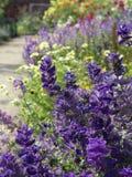 Blue Summer Flower Border royalty free stock photos