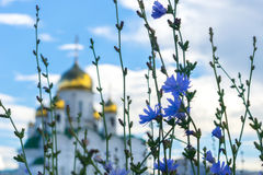 Blue summer flowers on the background. Of blurred shining golden domes of a Russian Orthodox Church against white clouds on blue sky Royalty Free Stock Photography