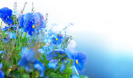 Blue summer flowers Royalty Free Stock Photography