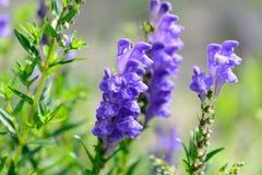 Blue summer garden flowers Stock Photo