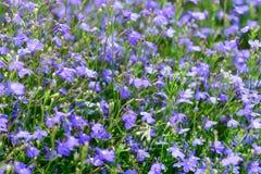 Blue summer garden flowers Stock Images