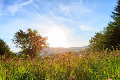 Blue Summer. Summer Landscape Picture from Bavaria. It was shut under the blue sky in the morning in a clover field in August Royalty Free Stock Photo