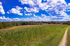 Blue Summer Skies. Landscape picture of a beautiful blue sky over a general corn field in the Summer of 2015 stock photography