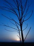 Blue sundown. Sundown and tree silhouette in a blue stock photo