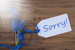 Blue Sunny Srping Grape Hyacinth, Label, Sorry Stock Image