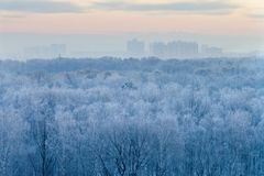 Blue sunrise in very cold wintermorning Stock Photo