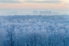 Blue sunrise in very cold wintermorning Stock Photo