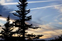 Blue Sunset. Spruce tree framed by a spectacular sunset Stock Photos