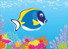 Blue surgeon fish. A funny blue-faced surgeonfish swimming in blue water over amazing colorful corals in a tropical sea, a vector illustration in cartoon style Stock Photography