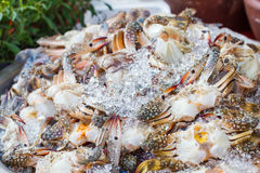 Blue swimming crab or Flower crab with ice in seafood market. Stock Image