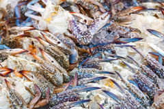 Blue swimming crab or Flower crab with ice in seafood market. Royalty Free Stock Images