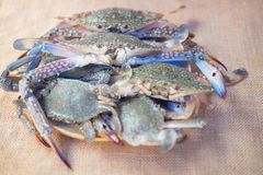 Blue swimming crab or flower crab. On dish ready to cook Royalty Free Stock Image