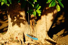 Blue swing on giant tree royalty free stock photo