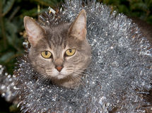 Blue tabby cat with silver tinsel Royalty Free Stock Photos