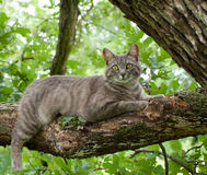 Blue tabby cat on tree branch Stock Photos
