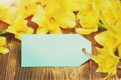 Blue tag, yellow narcissus, spring flower bouquet, womens, mothers day. Happy easter egg. holiday bunny and eggs, spring flower backround blue shopping tag Stock Photography